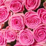 Fond d'image des roses roses images libres de droits
