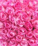 Fond d'image des roses roses photographie stock libre de droits