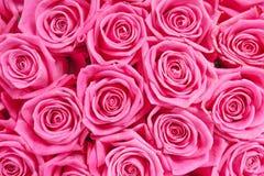 Fond d'image des roses roses image stock