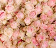 Fond d'image des roses roses photo libre de droits