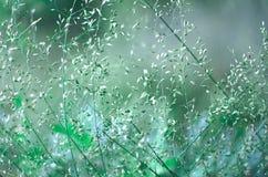 Fond d'image d'herbes d'épillets photos libres de droits