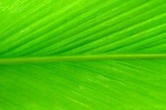 Fond d'image d'une grande feuille verte Photo libre de droits