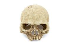 Fond d'isolat de crâne de primat photos libres de droits