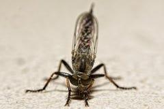 Fond d'isolement de couche de plan rapproché de moustique Images libres de droits