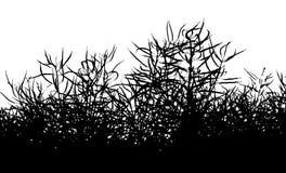 Fond d'isolement de silhouette de colza - fond d'herbes Photo libre de droits
