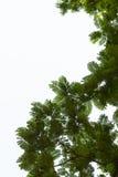 Fond d'isolement par feuille verte Photos stock