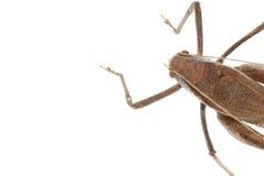 Fond d'isolement par katydid d'insecte images stock