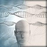 fond 3D médical avec des brins d'ADN et visage masculin avec certains I Photos libres de droits