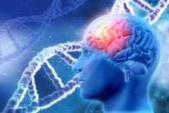 fond 3D médical avec le cerveau et les brins d'ADN Photographie stock