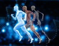 fond 3D médical avec le chiffre masculin dans la pose fonctionnante Image stock