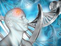 fond 3D médical avec le chiffre masculin et les brins d'ADN Photo libre de droits