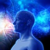 fond 3D médical avec les brins d'ADN et la tête masculine Image libre de droits