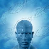 fond 3D médical avec les brins d'ADN et le visage masculin Photos stock