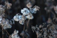 fond d'obscurité de jardin de fleur d'hiver Image stock
