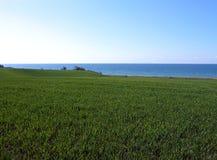 Fond d'océan classé par blé Photo stock