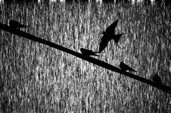 Fond d'oiseaux de cru Images libres de droits