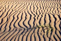 Fond d'ondes de sable Image stock