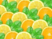 Fond d'orange et de citron avec la lame verte Photographie stock libre de droits