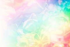 Fond d'orchidée Photographie stock libre de droits