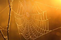 Fond d'un éclat de Web au soleil Image stock