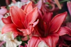Fond d'un bouquet de plan rapproché rouge de lis photographie stock