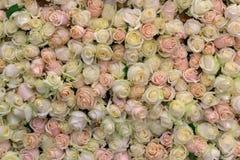 Fond d'un grand choix de crème et de roses roses Images stock