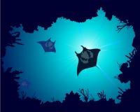 Fond d'un récif coralien avec le rayon de manta Photographie stock libre de droits