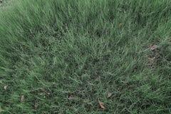 Fond d'une herbe verte, texture d'herbe verte Photographie stock libre de droits