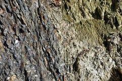 Fond d'une roche métamorphique posée Photographie stock libre de droits