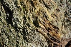 Fond d'une roche métamorphique posée image stock