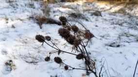 Fond d'usine L'hiver plante le fond Paysage de nature de forêt d'hiver Champ blanc vert Image libre de droits
