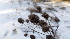 Fond d'usine L'hiver plante le fond Paysage de nature de forêt d'hiver Champ blanc vert Photographie stock libre de droits