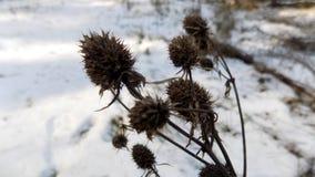 Fond d'usine L'hiver plante le fond Paysage de nature de forêt d'hiver Champ blanc vert Photos libres de droits