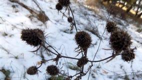 Fond d'usine L'hiver plante le fond Paysage de nature de forêt d'hiver Champ blanc vert Images stock