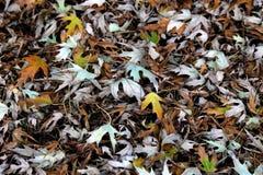 Fond dans des couches jaunes de tons de feuille Ordures de feuille d'automne dans la ville, fond extérieur de nature d'automne av photo libre de droits