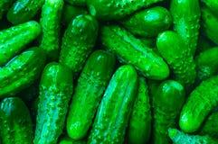 Fond de beaucoup de concombres verts Image libre de droits