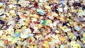 Fond de belles feuilles d'automne banque de vidéos