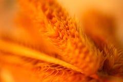 Fond de blé Image stock