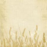 Fond de blé Image libre de droits