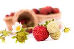 Fond de blanc de panier de fraise Images libres de droits