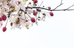Fond de blanc de fleur de fleurs photographie stock libre de droits