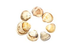 Fond de blanc de Shell Circle On de mer Image libre de droits