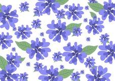 Fond de bleuets de fleurs sauvages Photo stock