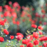Fond de bokeh de jardin Photos stock