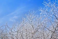Fond de branche d'hiver Images libres de droits