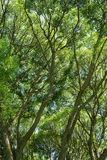 Fond de branches d'arbre Images stock