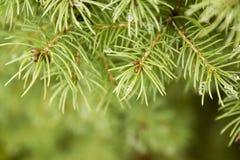 Fond de branches d'arbre de sapin de Noël photographie stock libre de droits