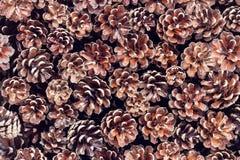Fond de cônes de pin de Brown image stock