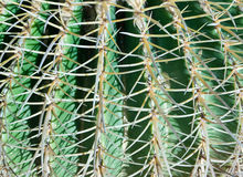 Fond de cactus photos stock