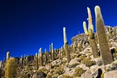 Fond de cactus Photos stock